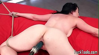 Inked babe restrained for beaver toying
